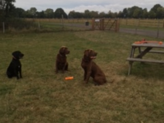 The family Kite dogs